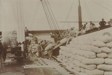 Хлебный караван судов у г. Рыбинска, выгрузка хлеба.