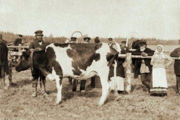Сельскохозяйственная выставка Ярославского земства